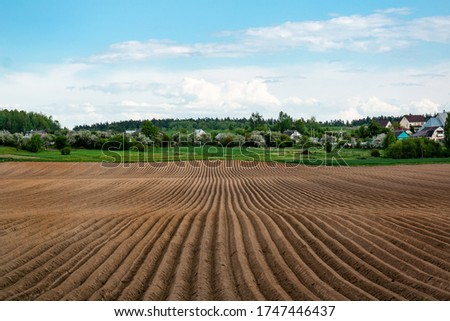 Potato field in the early spring after sowing - with furrows running towards on a large field in the village Foto stock ©