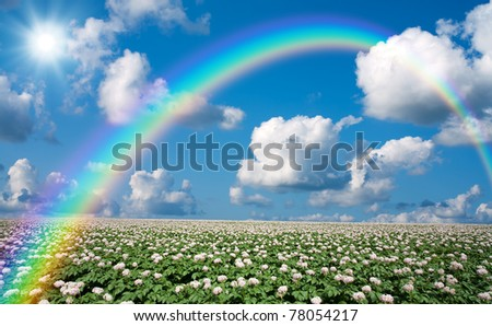Potato field with sky and rainbow