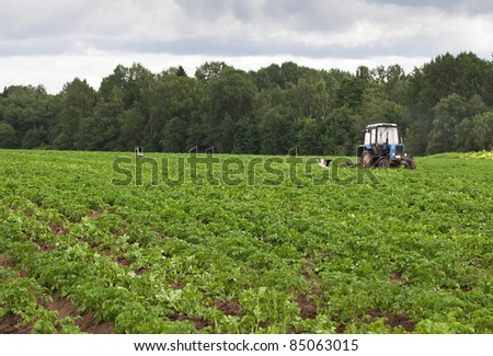 Potato field with tractor working