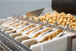 Potato harvest on conveyor sorting