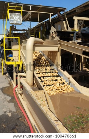 Potatoes are moved along a conveyor belt where they are washed at a Central California packing plant