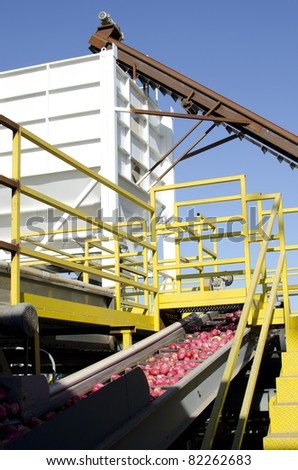 Potatoes at a packing plant are washed, then transported by conveyor into a hopper for loading onto trucks