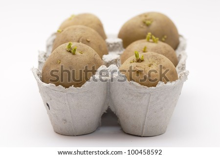 Potatoes chitting in an egg carton before planting out on an allotment.