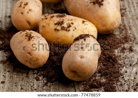 Potatoes in soil on old wooden table