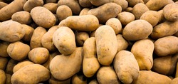 Potatoes. Texture vegetable white young potato.