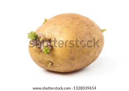 Potatoes with sprouts for planting isolated on white ストックフォト ©