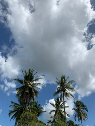 Potrait vertical image of thick white cloud on blue sky with coconut tree. Has copy space.