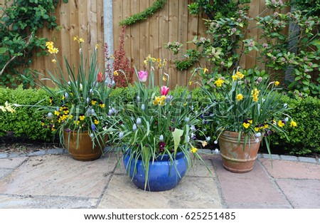 Pots containing spring flowers on a patio                       #625251485