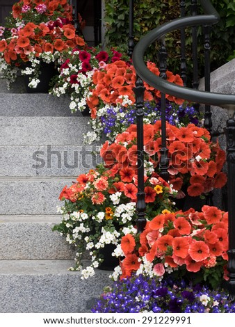 Pots of bright red, white and blue flowers arrayed down side of stone steps with metal railing.