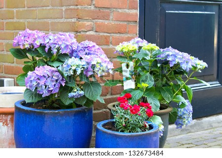Pots of flowers near the flower shop in Gorinchem,  Netherlands