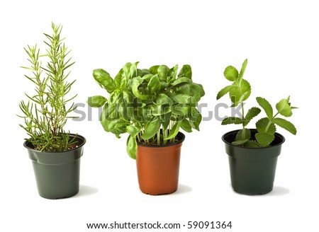 Pots of rosemary, basil and mint isolated on white background in horizontal format