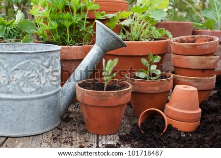 Pots with flowers/garden/planting