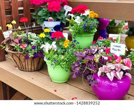 Potted Flowers Flower Pots Plants for Sale at Garden Nursery & Shutterstock - PuzzlePix