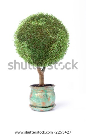 Potted green globe plant over white background