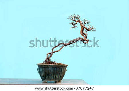 potted landscape