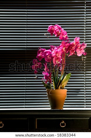 Potted pink orchid on black table top in front of black venetian blinds