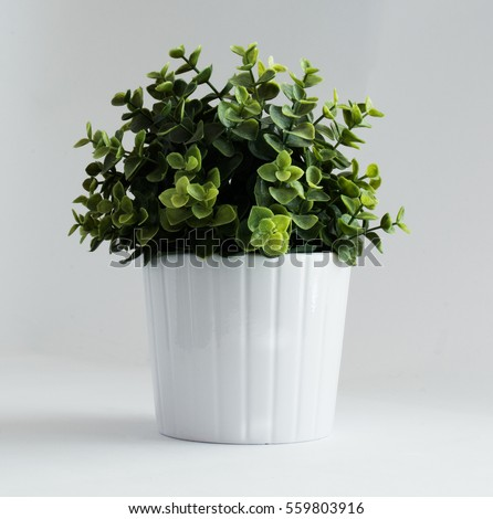 Potted Plant #559803916