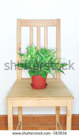 Potted plant on wooden chair