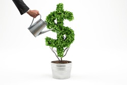 Potted plant with dollar shape. 3D Rendering