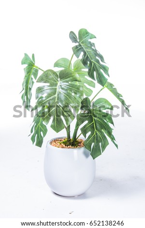 Potted plants #652138246