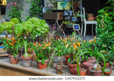 Potted plants in the shop. growing of flower pots at home #1347953375