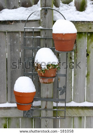 Potted plants in the snow.