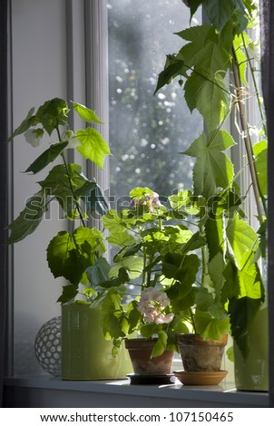 Potted plants on windowsill