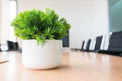 Potted plants on wooden desk. Home or office decorations
