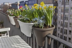 potted spring flowers on a balcony fence in the city