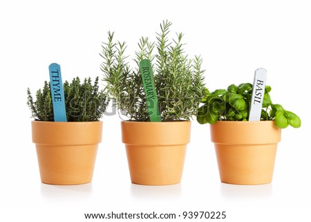 potted thyme, rosemary and basil isolated