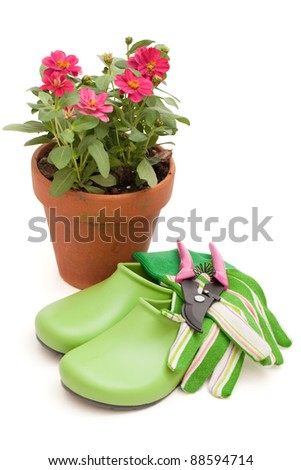 Potted zinnia with gardening equipment isolated on a white background