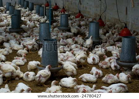 Poultry farm interior close-up
