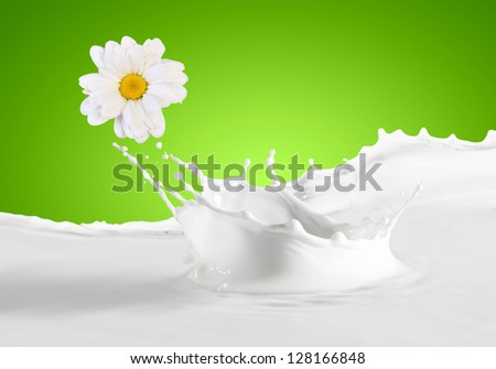 Pouring white and fresh milk with chamomiles on a background