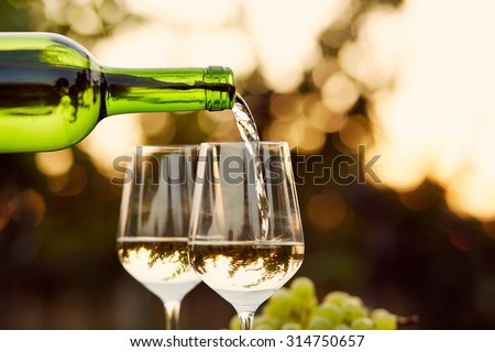 Pouring white wine into glasses in the vineyard, toned #314750657