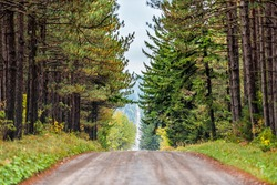 Pov car point of view of road through spruce pine tree forest lining in symmetry in Dolly Sods, West Virginia in autumn fall