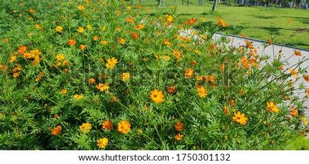 pov flower lt`s so beautif...it all in my eyes. Stock fotó ©