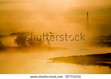 power line in the fog with flying birds landscape