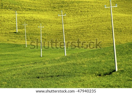 Power line telephone poles in rural green grass and wheat field in countryside and farm.