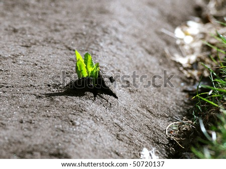 Power Of Life - Dandelion coming through asphalt
