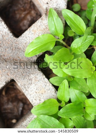 power of nature, little plant growing in a small area of concrete block.