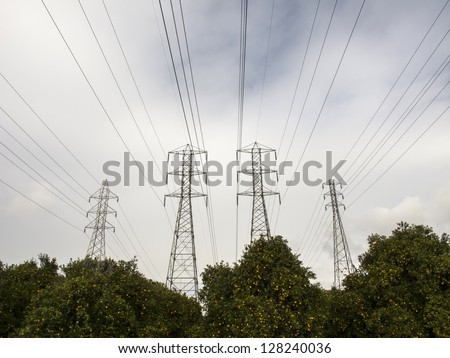 Power poles in the center of a Orange tree grove