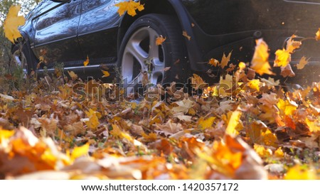 Powerful car driving fast through alley over yellow leaves at park. Colorful autumn foliage flies out from under wheel of auto. Black SUV crossing along trail at sunny day. Side view Slow motion.