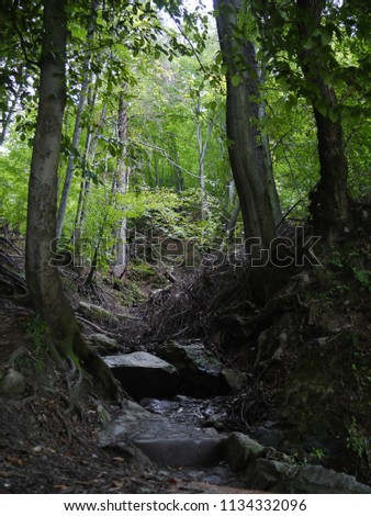 Powerful tree roots in thickets of forest near tall deciduous trees #1134332096