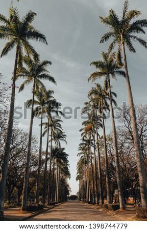 Praça da Liberdade/Liberty Square, in Belo Horizonte, Minas Gerais, Brazil. #1398744779