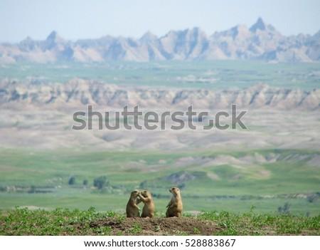 Prairie Dog Family in Badlands ストックフォト ©