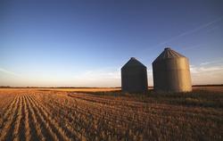 Prairie Grain Silos on a tilled wheat field at sunset
