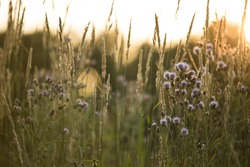Prairie Grass and Flowers During Sunset