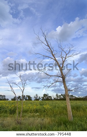 Prairie Landscape with a row of dead trees