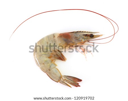 Prawn isolated on white