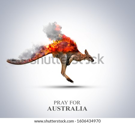 Pray For Australia. Australia wildfire killed half a billion animals. Save animal - save tree-save forest save world. animals burned by wildfire. climate change effect.
